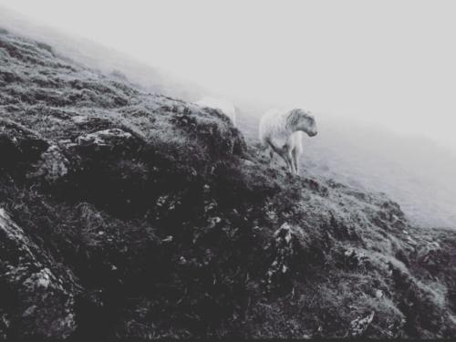 Snowdon, North Wales, UK 2018