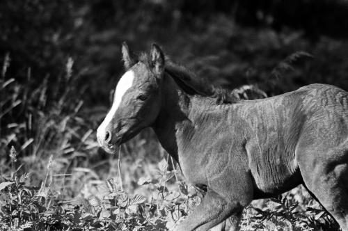 Bay foal - Belfegor Stable, Wroclaw, Poland 2006
