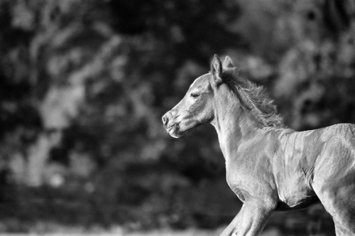 Foal from Belfegor Stable, Wroclaw, Poland 2006