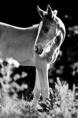 Chestnut foal - Belfegor Stable, Wroclaw, Poland 2004-2006