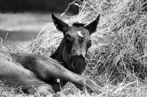 Bay foal - Belfegor Stable, Wroclaw, Poland 2004-2006