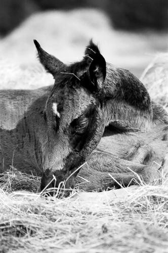 Bay foal -Belfegor Stable, Wroclaw, Poland 2006