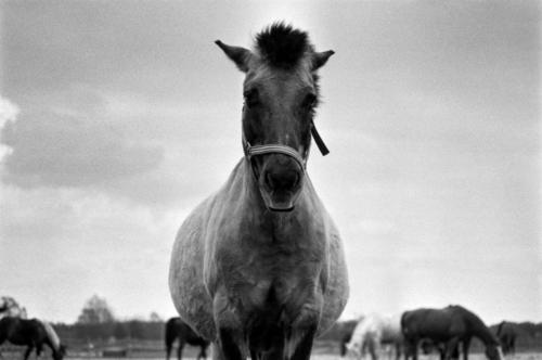 Gelding Bulek - Horse Sanctuary Tara, Poreby, Poland 2005