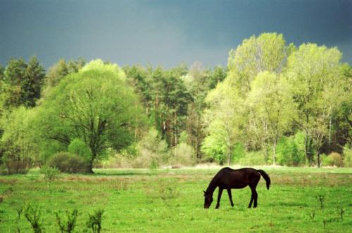 Horse Sanctuary Tara, Poreby, Poland 2005