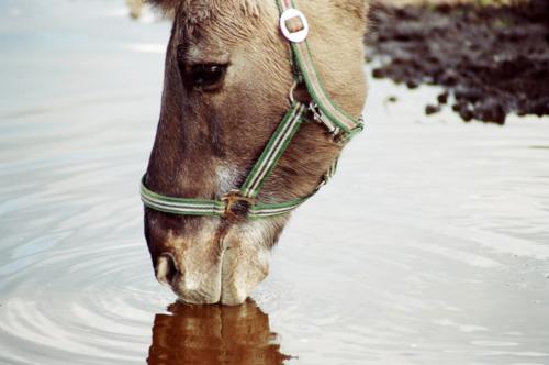 Bulek - Horse Sanctuary Tara, Poreby, Poland 2005