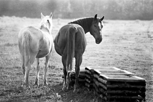 Melisa with  her friend - Horse Sanctuary Tara, Poreby, Poland 2005