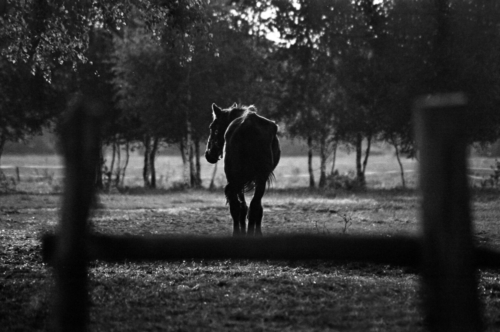 Wist - Horse Sanctuary Tara, Poreby, Poland 2005