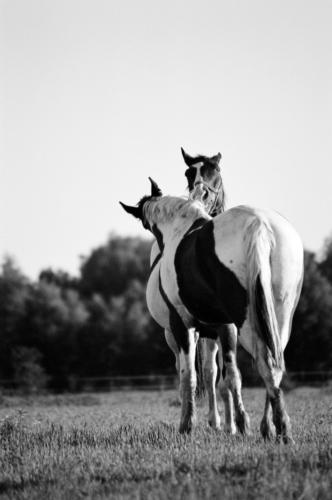 Piebald friendship - Horse Sanctuary Tara, Poreby, Poland 2005