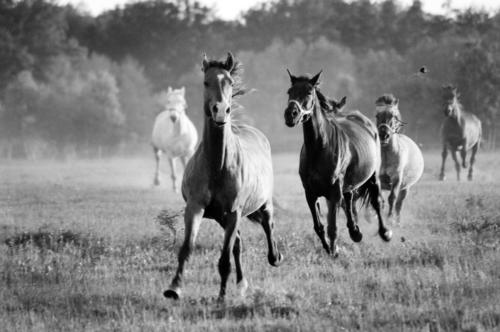 Hugo - Horse Sanctuary Tara, Poreby, Poland 2005