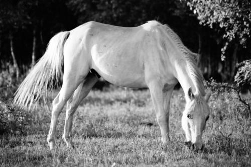 Arabian gelding Ali - Horse Sanctuary Tara, Poreby, Poland 2005
