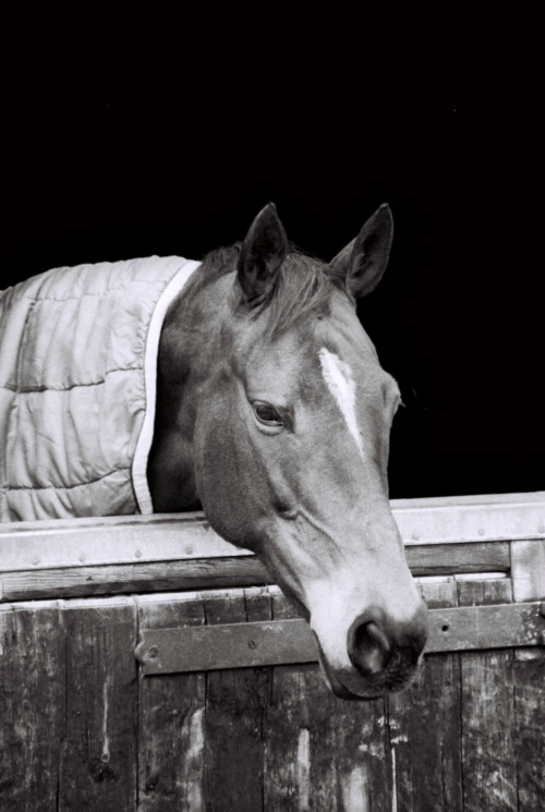 Horse in a stable, Nether Westcote, UK, 2007