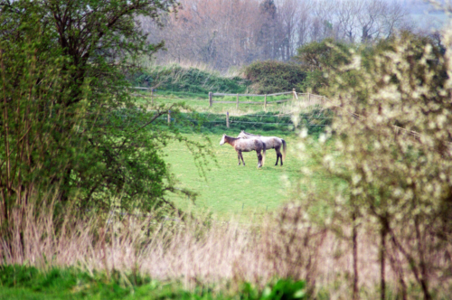 Horses in the field, Nether Westcote, UK, 2007