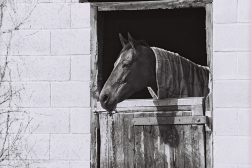 Horse in the stable, Nether Westcote, UK, 2007