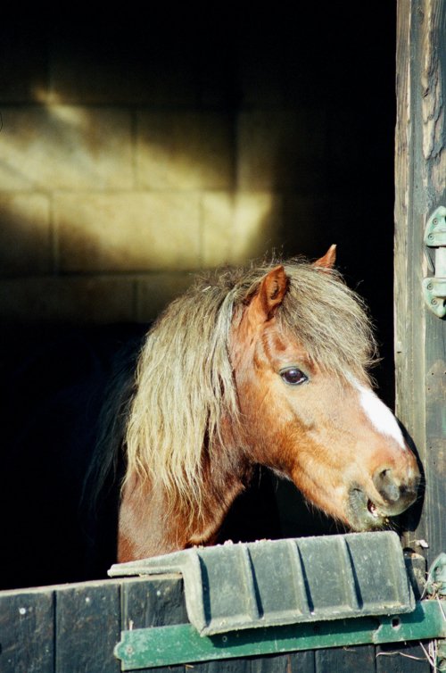 Portrait of a pony, Nether Westcote, UK, 2007