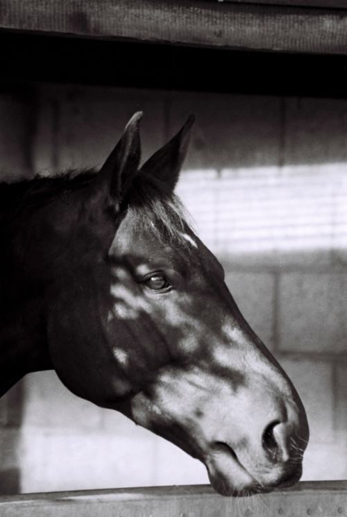 Portrait of a mare, Nether Westcote, UK, 2007