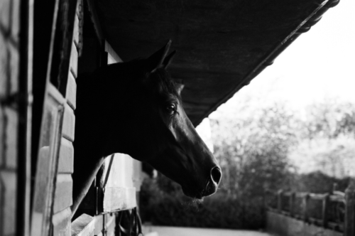 Portrait of a horse in stable, Nether Westcote, UK, 2007