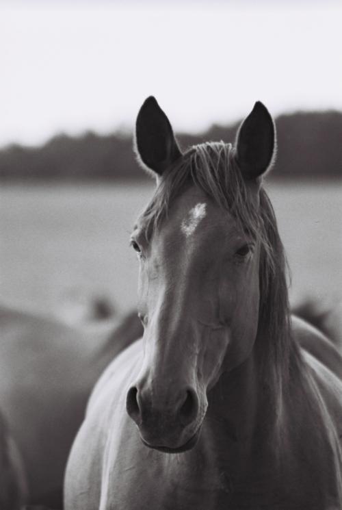 Hucul mare, Gladyszow Stud, Poland, 2007