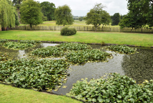 Pond - Hanbury Hall, Worcestershire, UK 2020